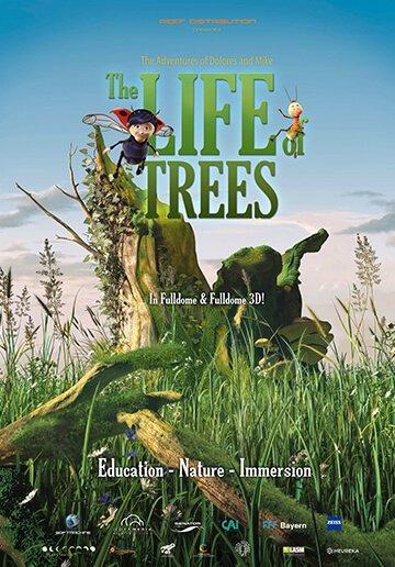 medžių paslaptis